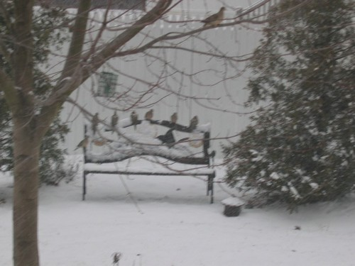 Birds on Bench in Snow